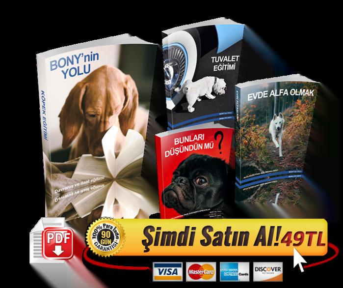köpek eğitim kitabı