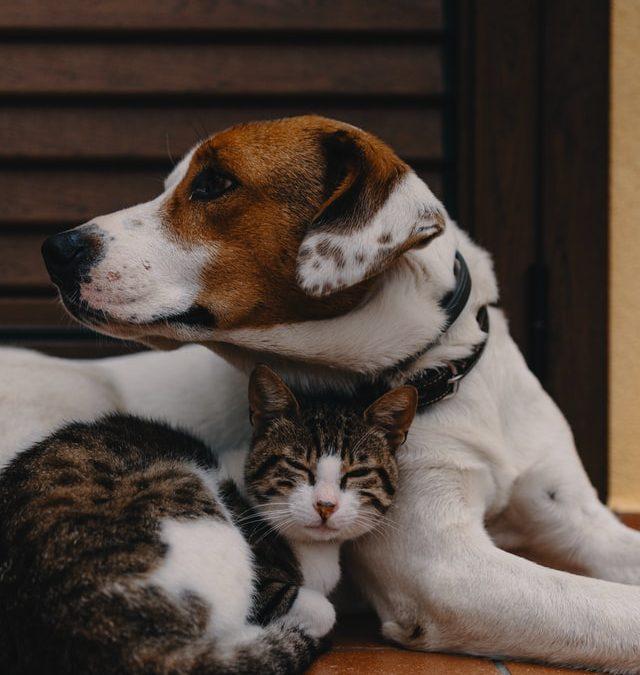 kopegim-kedillere-saldiriyor